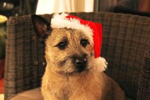 Christmas Jessie
