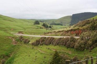 Te Uri Road