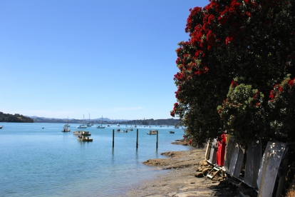 Pohutukawa. The New Zealand Christmas Tree