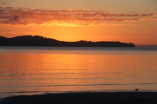 Lonely Oyster catcher. Sunrise, February 2014