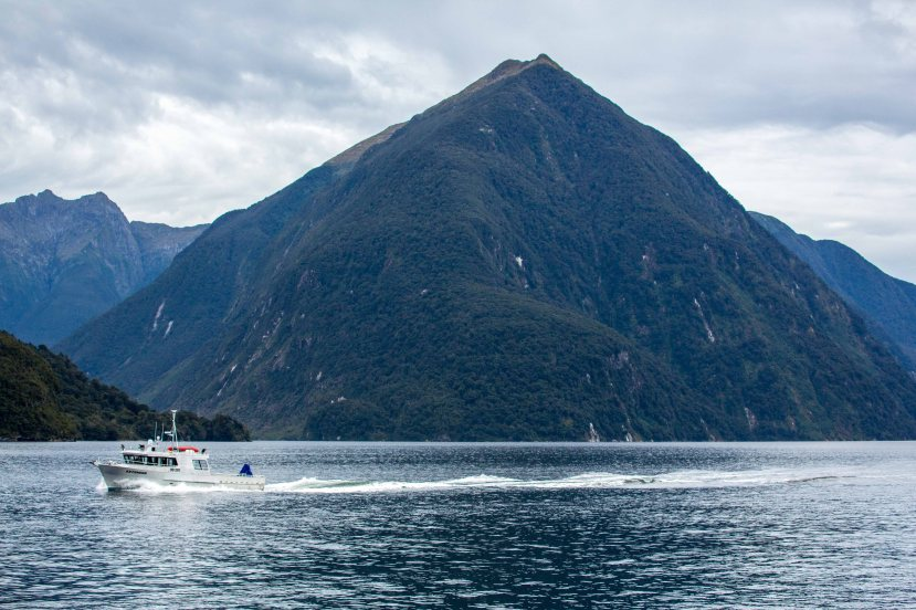 Doubtful Sound Fisherman